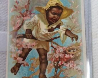 1800s Black Americana Boy in Tree TRADE CARD Farrand Organs Bangor PA perfect Vibrant