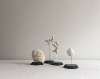 Mounted Coral Specimens Set of Three