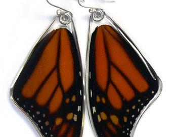 Real Monarch Butterfly (Danaus plexippus) (top/fore wings) earrings