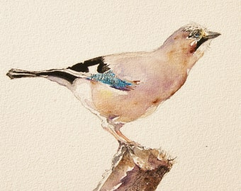 Jay Painting - Original Watercolor
