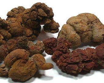 "2.25-3"" Dinosaur poop petrified coprolite natural fossil rock stone mineral specimen SIZE LARGE"
