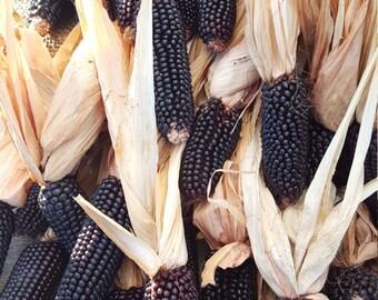 5 lbs. Dakota Black Certified Organic Popcorn