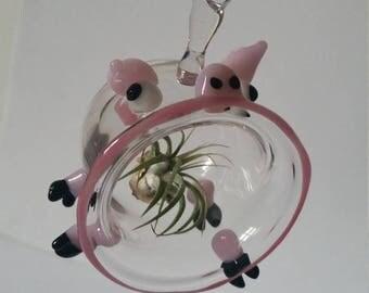 Pink piggy airplant trarium