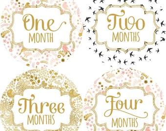 Gender Neutral Monthly Milestone Stickers - Baby Boy Monthly Stickers - Animals - The Sweet Rhino