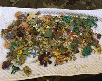 Lot of Pressed Dried Flowers-variety of flowers, leaves beautiful