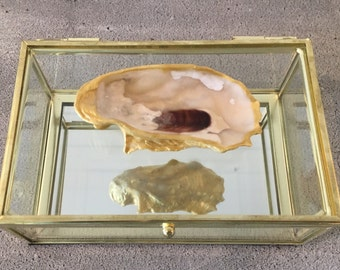 Rectangle oyster glass box