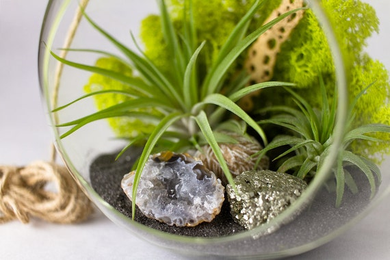 Air Plant Terrarium Kit with Geode, Pyrite, & Desert Rose || DIY || Large Round Hanging