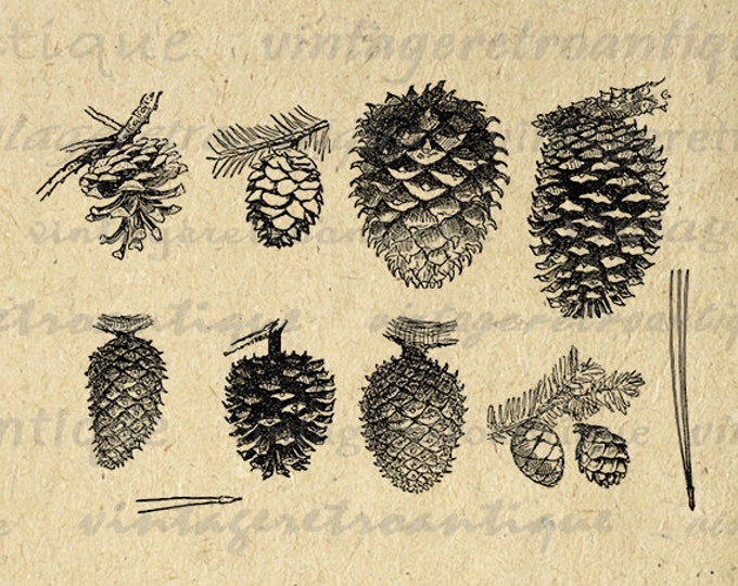Printable Pinecones Digital Image Pine Cone Graphic Tree Pinecone Clipart Collage Sheet Download Artwork Antique Clip Art HQ 300dpi No.1048