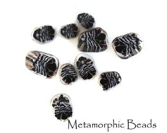COE104 - Trilobite Murrini