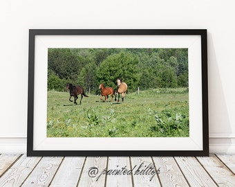 Horse Photography, Horse decor, Galloping horses in the field  - Horse Print, Wall Decor, Equine Art