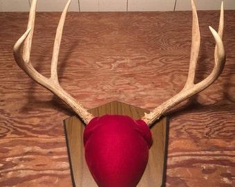 Whitetail Deer Antlers - Buck Doe - Deer Trophy -  Deer Sheds - Antler Taxedermy - Craft Antlers - Chandelier Parts