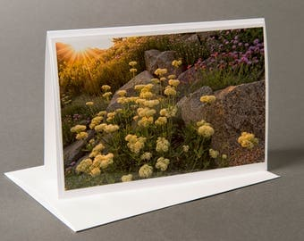 Blank photo notecard, Wasatch Mountain Wildflowers