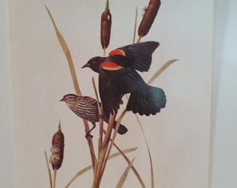 50% Off Estate Sale Vintage Red Winged Blackbird 1970 Frameable Picture, Wall  Art Print of Bird Watercolor by  J.F. Lansdowne Item 483