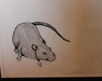 Framed etching of a rat *Original Art Piece*