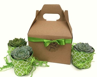 Succulent Gift Box with a variety of Echeverias-Garden in a Box-Thank You Gift-Succulent Gift Set-Succulents-Succulent Housewarming Gift
