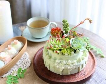 Succulents Cake Resin Planter
