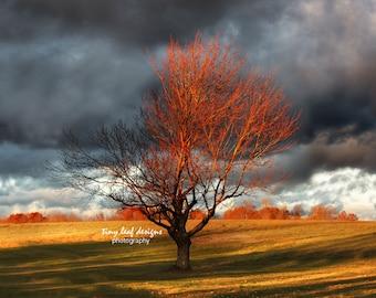 Colorful Tree Original Photography