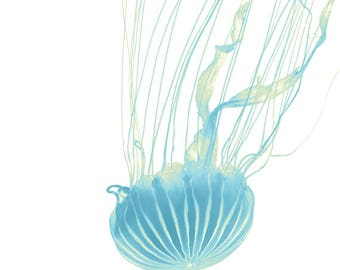 Blue Jellyfish Art Print, Blue Jellyfish Photography Wall Art, Jellyfish Photography, Jellyfish Poster, Blue Jellyfish Art