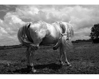 Eilean / Île / Island - Equine Fine Art Horse Photography - Cheval Etalon  Photographie d'Art