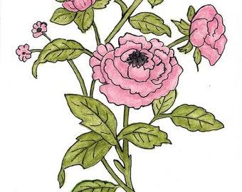 Original Art Created With Watercolor Pencils - Pink Peonies - Botanical Art