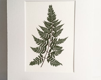 Real Pressed Fern Botanical Art Herbarium of Japanese Painted Fern 5x7 OR 8x10