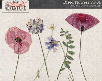 Dried Flowers, Digital Download Wildflowers, Poppies, Cornflower, Commercial Use OK, Outdoor Themed Kits, Greenery, Leaf, Scrapbook Elements