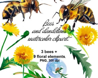 Bees and dandelions watercolor clipart. The pictures are drawn by hand. 3 bees + 9 flower elements + 1 wreath + 1 angle. Commercial use.