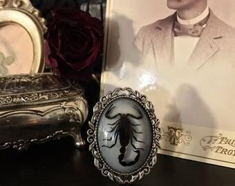 Victorian Black Scorpion Brooch, Taxidermy, Insect Jewelry, Real Scorpion, Scorpion Jewelry, Victorian, Memento Mori, Gothic Jewelry