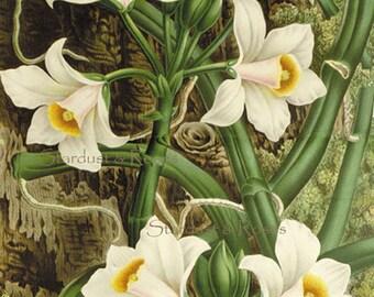 ANTIQUE Floral ArT Print DOWNLOAD Daffodils - INSTANT Digital Vintage Painting - Crafts Card Making Junk Journal Altered Art to Frame no3767