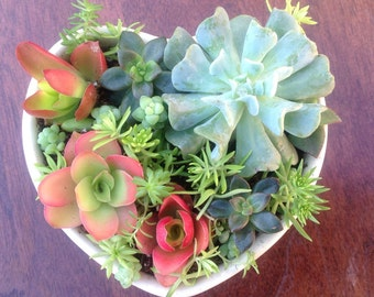 Beautiful Heart Live Succulents Planter