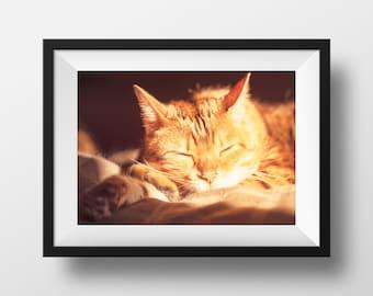 "Sleepy Cat Photograph, Cat Print, Cute Feline, Bengal Cat, Napping Kitty | ""Cat Nap"""