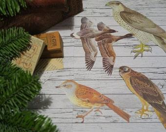 12 Large Vintage Bird Cut-Outs