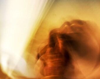 Knobby — photograph — Giclee art print