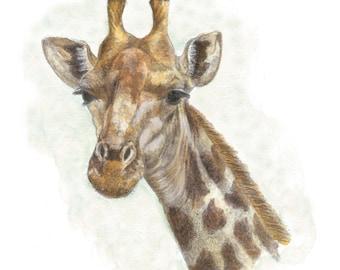 Giraffe - 9 x 12 Giclee Print