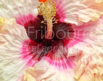 Tie Dye Hibiscus