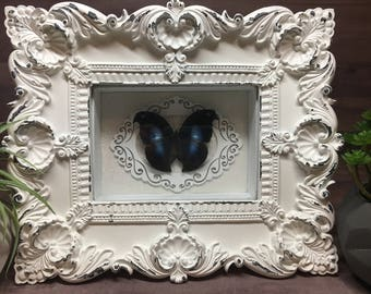 Framed Great Blue Hookwing Butterfly Shadow Box