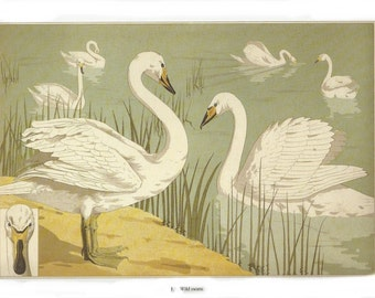 Wild Swans Art Nouveau Print, Rustic Country Cottage Decor, Vintage Verneuile Book Page Illustration, Wall Art or Craft Paper Supply