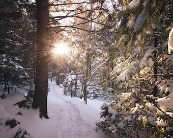 Snowy Path - Mountain Snow, NC