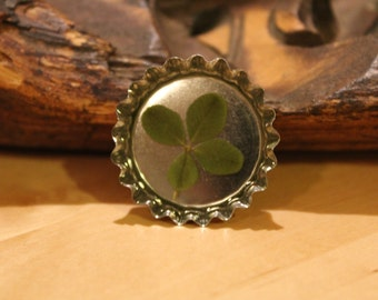 Real Four Leaf Clover Kitchen Magnet for St. Patrick's Day / Graduation / Get Well / Good Luck
