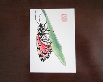ACEO Bella Moth - Archival Print -  Watercolor Insect Art
