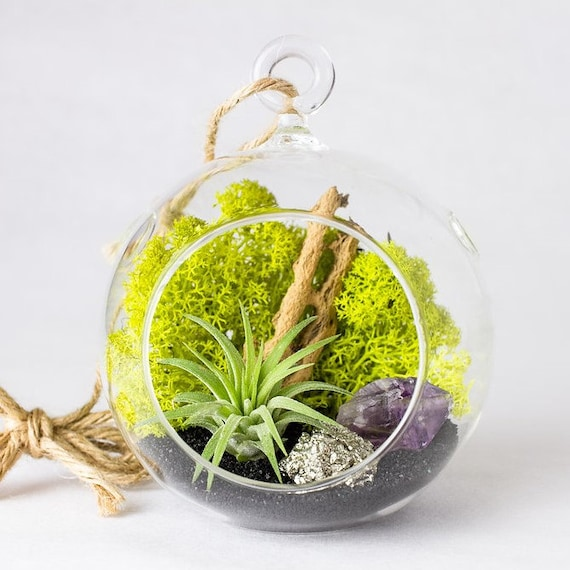 Amethyst Crystal Point + Pyrite Air Plant Terrarium || DIY Kit || Small Round Hanging