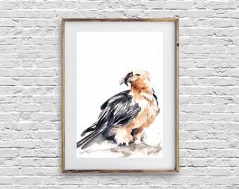 Bird painting, original watercolor painting, Lammergeyer Bird, bird watercolour art