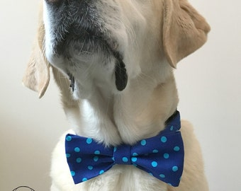 Blue Polka Dot Bow Tie & Collar OR Bow Tie Only *OPTIONAL
