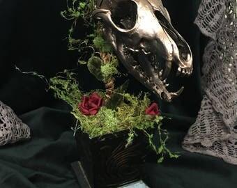 Fox Skull Plant ~ Real Fox Skull ~ Animal Skull ~ Bones ~ Taxidermy ~ Red Fox ~ Gothic Decor ~ Weird Plant ~ Curiosity Cabinet ~ Flowers