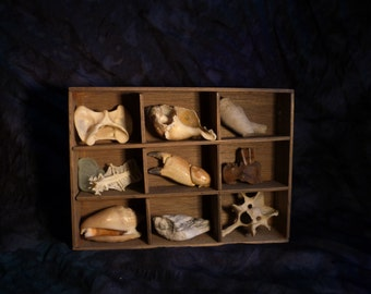 Natural History Curio Shadow Box