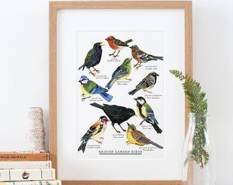 British Garden Birds Print | Bird Giclée Print  | British Nature Print | Bird Painting | British Bird Print | British Wildlife | 30x40 cm