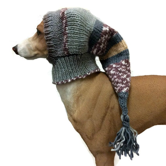 How to Care for an Italian Greyhound How to Care for an Italian Greyhound new foto