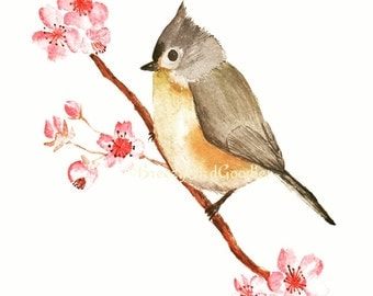 Tufted Titmouse Print with Cherry Blossom, Watercolour Painting, Tufted Titmouse Art, Bird Illustration, Cute Bird Print