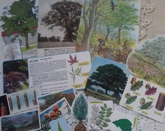 Ephmera pack trees and shrubs. snail mail, pen pals, journaling, collage.