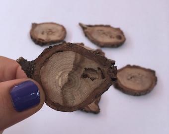 Wood Tree slices - Set of 6